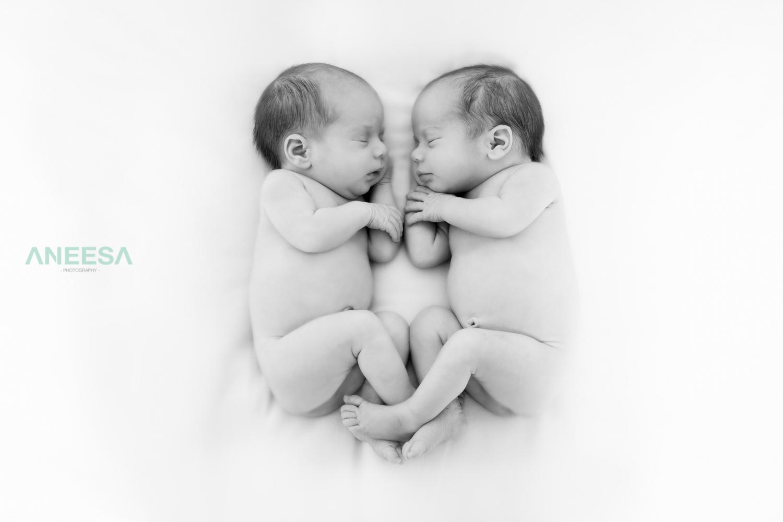 web twins